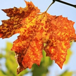 Fall Lowcountry South Carolina